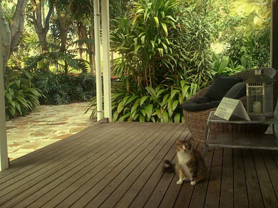 Byron Springs Guesthouse: Picture 7
