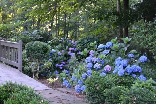 Hawkesdene House: Beautiful Gardens at Hawkesdene.