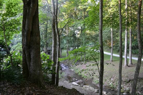 Hawkesdene House: Beautiful Forests at Hawkesdene