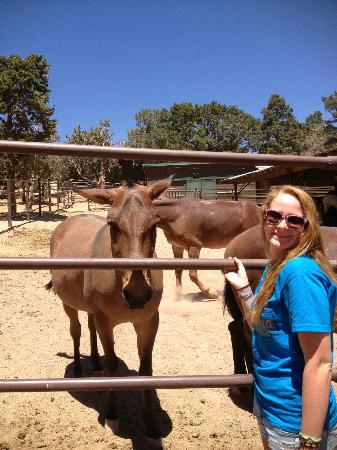 Angel's Gate Tours : Feeding the famous Grand Canyon mules