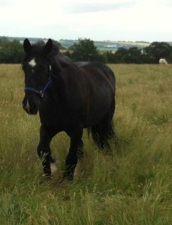 Belfairs Riding School: Guinness at grass