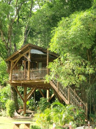 West Indies Cottage: La Cabane