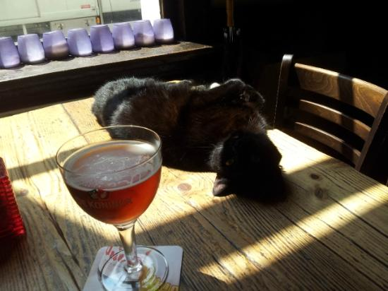 De Vagant: The pub cat enjoying the afternoon sun.