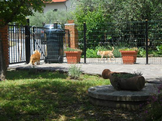 Luly's House: giardino esterno
