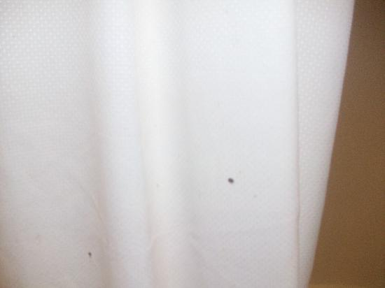 Rodeway Inn & Suites Hershey: moldy shower curtain