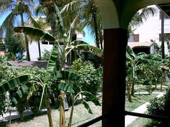 The Ocean Club: Bananas growing in garden at our deck