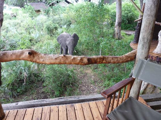 Tubu Tree Camp: Taken from the deck of our tent - the visiting elephant