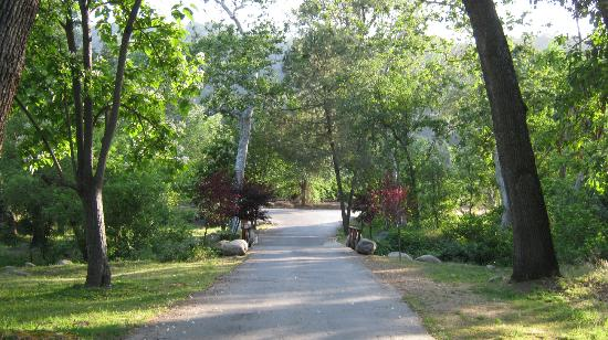 Sequoia RV Ranch: campground road