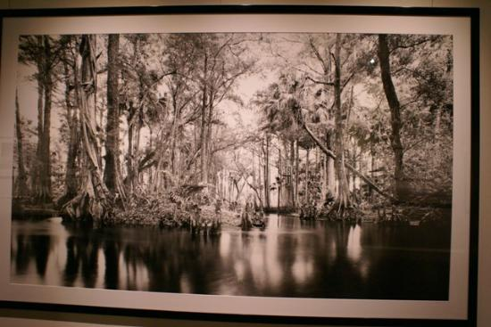 Southwest Florida Museum of History: One of Clyde Butcher's Black and white photos