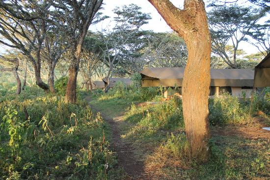 view of the Lemala Ngorongoro Tented Camp site