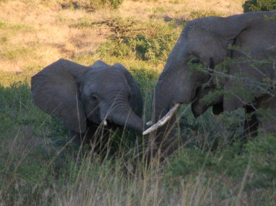 Thula Thula Exclusive Private Game Reserve and Safari Lodge: Elephants!