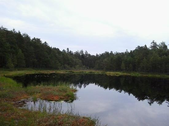 Natura Viva: Nuuksio Forest Lake Trail : One of Nuksio Forest Lakes.
