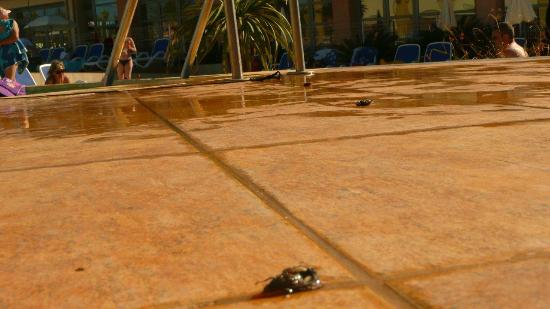 Belambra Clubs - Riviera Beach Club : La piscine et ses insectes morts.