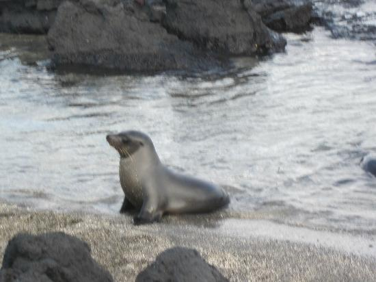Galapagos Sub Aqua : Precious seal pup
