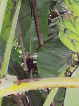 Lookout Inn Lodge: Monkeys from our room