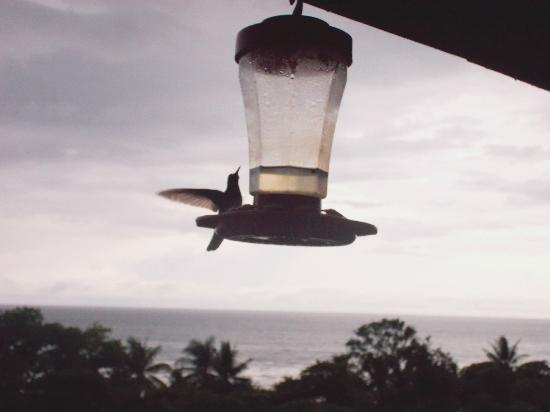 Lookout Inn Lodge: Hummingbirds are entertaining to watch each evening