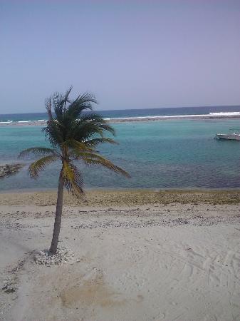 Carib Sands Beach Resort: Great area for snorkeling!