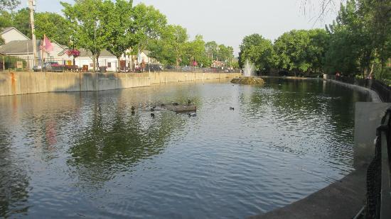manlius swan pond right next door picture of gentile 39 s bella cigna manlius tripadvisor. Black Bedroom Furniture Sets. Home Design Ideas