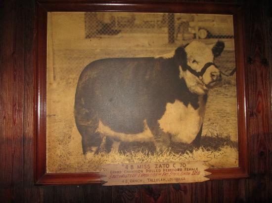 Cattlemen's Fort Worth Steak House: Champion Cow