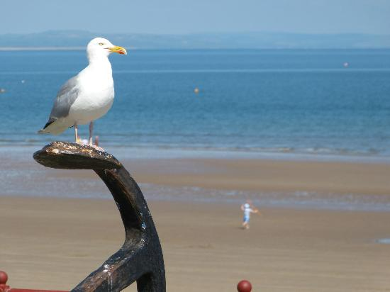 Cliff House Guest House: Seagull enjoying the day!