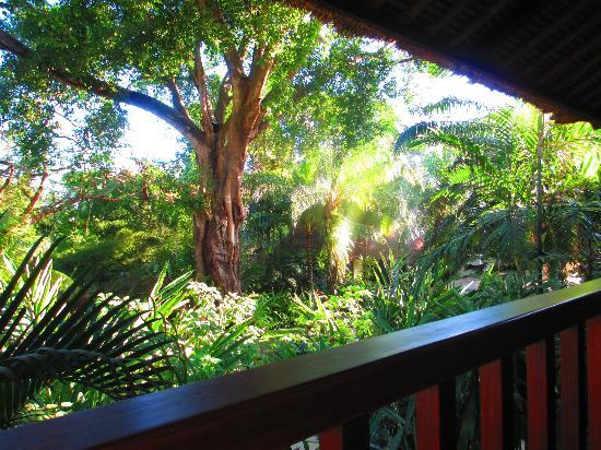 The Sandi Phala: Veiw from our room 