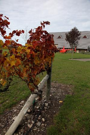 HELiPRO: Winery Tours