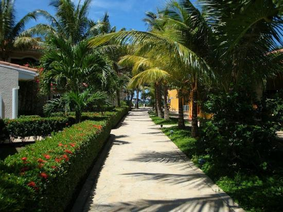 Mayan Princess Beach & Dive Resort : Walk from room to beach and restaurant