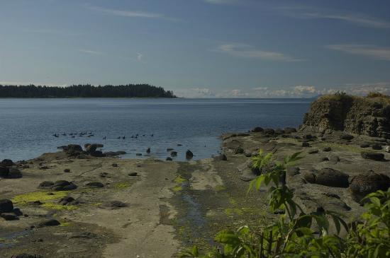 Pacific Shores Resort and Spa: Picture of Craig Bay from the shores of the resort while the tide is out.