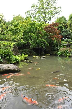 Hotel Mystays Premier Narita: garden with koi pond