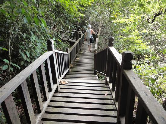 Penang Island, Μαλαισία: Boardwalk through the jungle