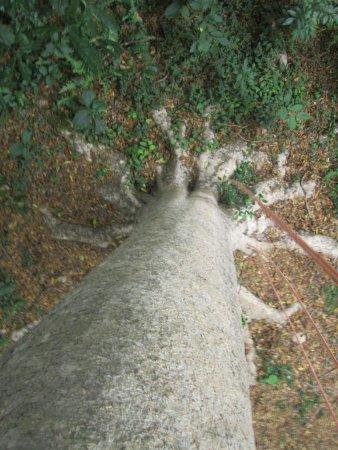 Selva Bananito Lodge: Treeclimbing from half way up