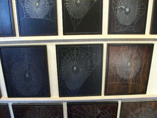 Knight's Spider Web Farm: Web Spider