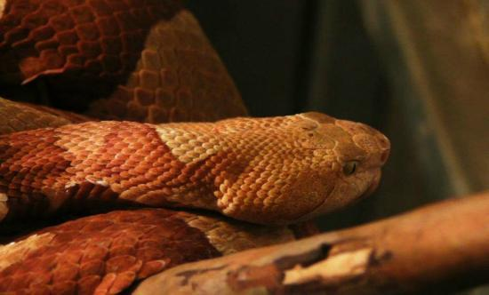 Lawnwood Snake Sanctuary : Snake