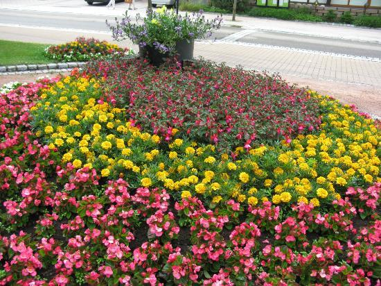 Parkhotel Waldeck: Anpflanzung gegenüber dem Hoteleingang