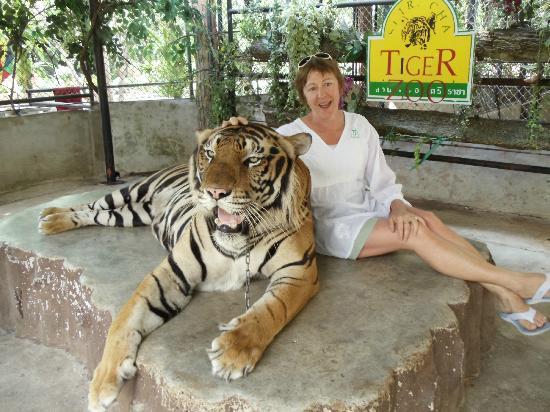 Sriracha Tiger Zoo: Big tiger photoshoot