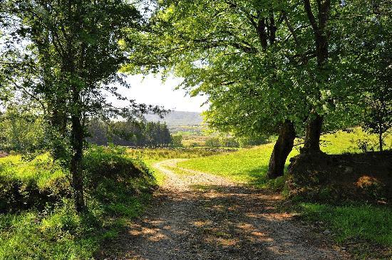 Glengowla Mines: Nature Trail