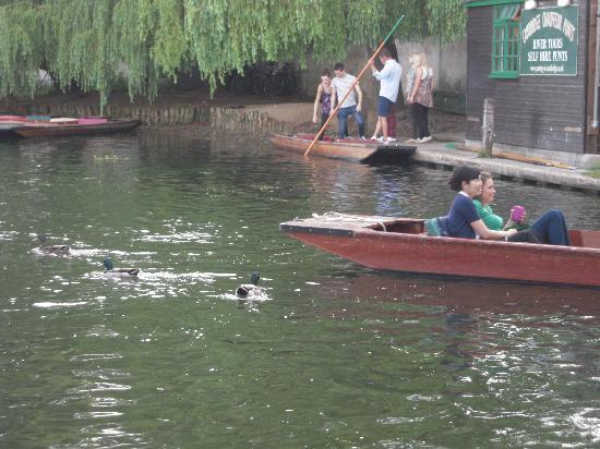 Scudamore's Punting Company: Relaxing time on Cam