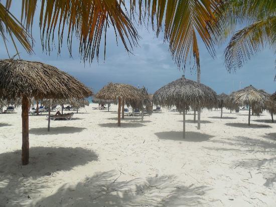 Sirena Beach : Sector de palapas.