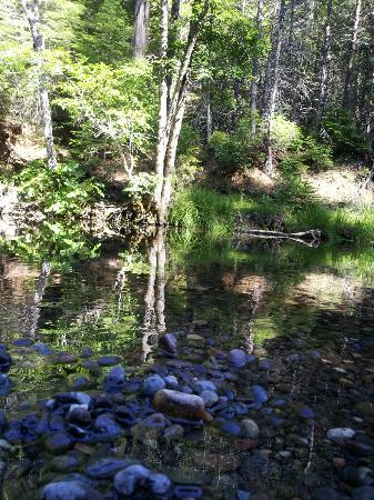 WorldMark Angels Camp : Hike through Calaveras State Park
