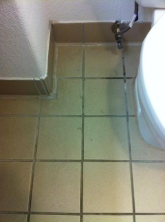 La Quinta Inn & Suites San Antonio Fiesta: Dirty floor