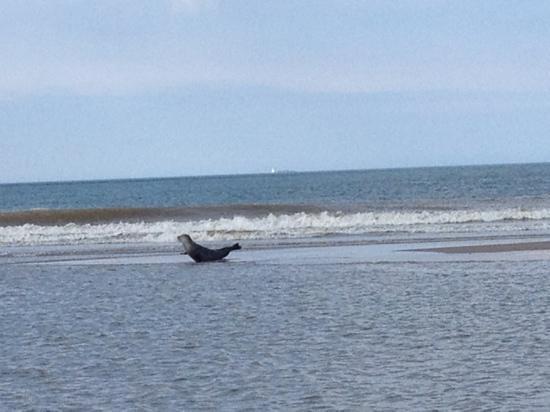 Barn & Beach: Seal posing on the beach
