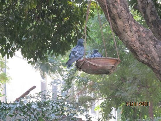 Hotel Anuraag Villa: lovely birds