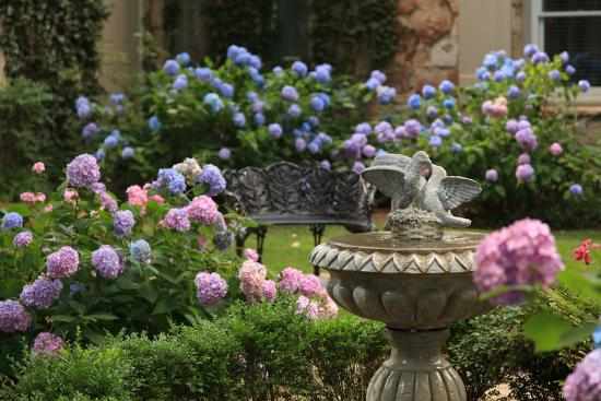 ‪‪Chanticleer Inn Bed and Breakfast‬: Courtyard with Hydrangeas and Fountain‬
