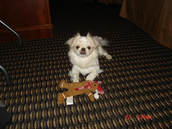 Comfort Inn & Suites Vancouver: Rosie loves the rooms too