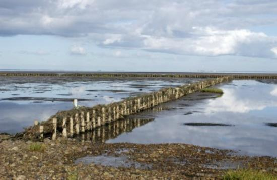 Mandø: Vadehavet