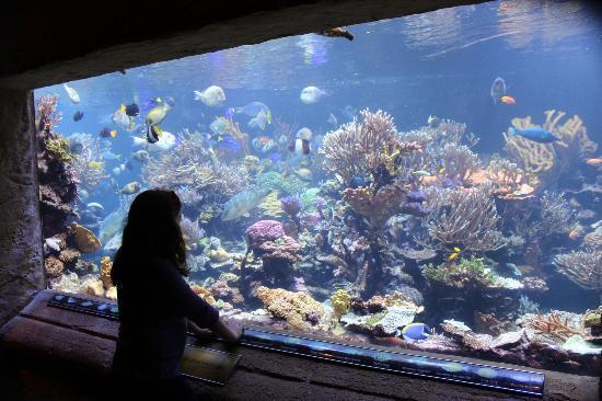 Long Island Aquarium My Favorite Tank