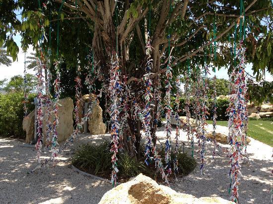 The Dali Museum: the wishing tree