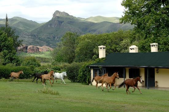 Dos Lunas Horse RIding Lodge: Dos Lunas & horses