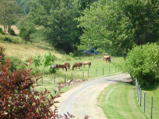 Bed & Breakfast at Mountain Valley Farm Image