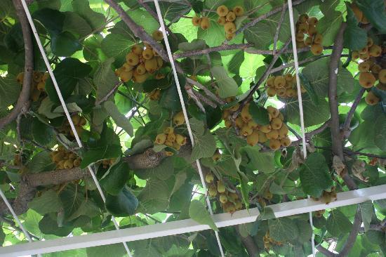 Villa Vidak Cavtat: Kiwi on the breakfast patio
